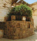 Le buisson-ardent du monastère Sainte Catherine du mont Sinaï